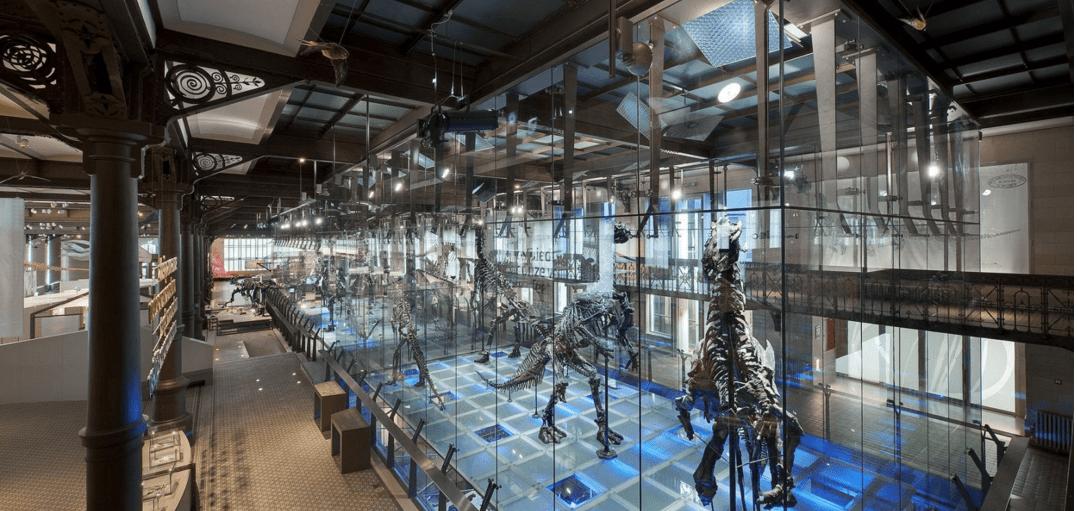 Bruxelles musée des Sciences Naturelles Ixelles