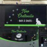 le chatouille bar à chat: bar insolite à Bruxelles