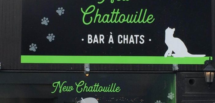 le chatouille bar à chat: bar insolite à Bruxelles