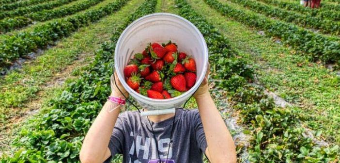 Les 4 meilleurs endroits où cueillir des fruits et légumes biologique près de Bruxelles?